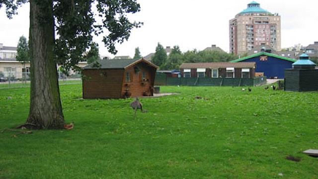 Overkant - kinderboerderij